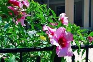 001-closeup-home-plants
