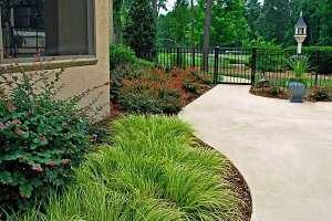 020-maintenance-home-plants