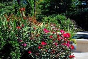 002-closeup-home-plants-2