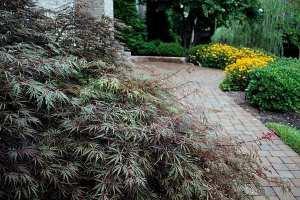 003-closeup-home-plants-4