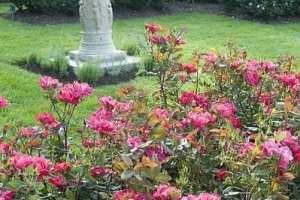 006-fontaine-rose-garden